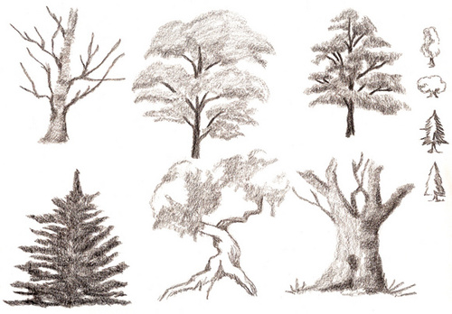 बिना सोचे समझे Perfection: What पेड़ Did आप Fall From?