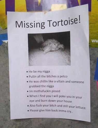 This Person Must Really 사랑 their Turtle...