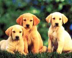 Cute Welpen Hintergrund called cute puppies!