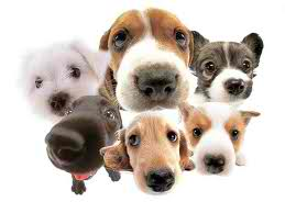 Cute Puppies achtergrond entitled cutee
