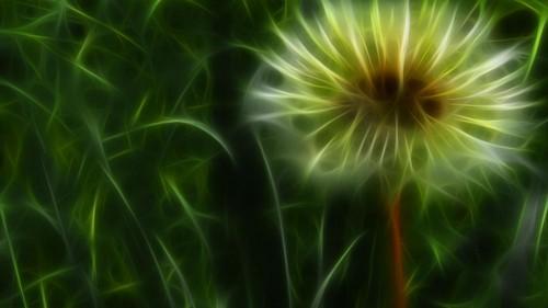 Fantasi Bunga