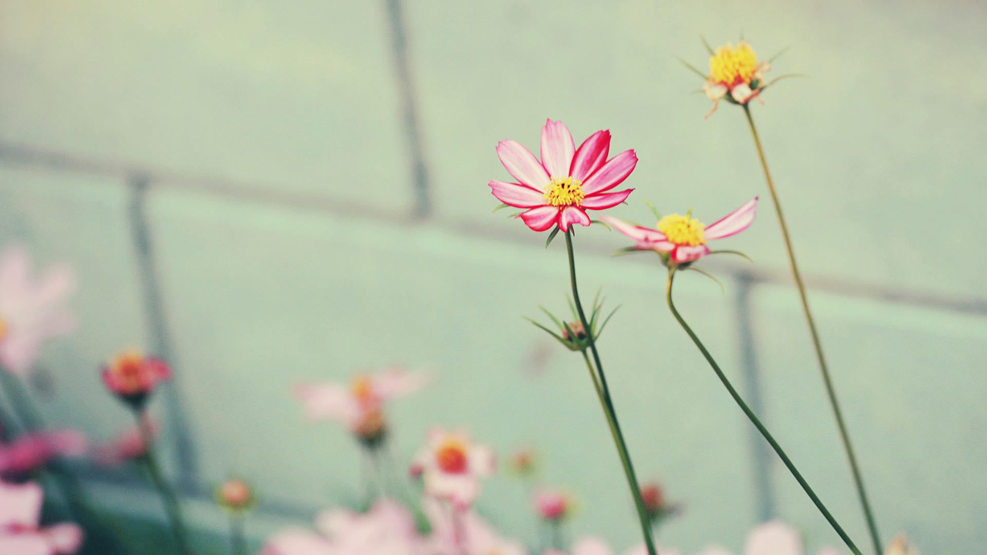 flor wallpaper