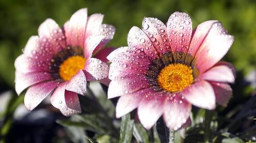 spring snowdrops fond d'écran