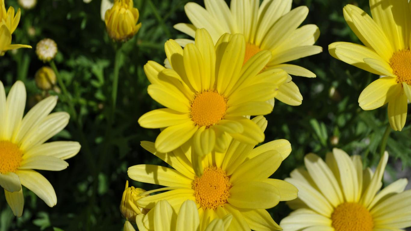 Spring Snowdrops Wallpaper Flowers Photo 32897801 Fanpop