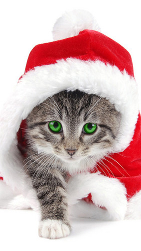 ★Cats Cinta Krismas too☆