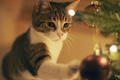 ★Cats love Christmas too☆