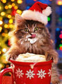 ★Cats l'amour Christmas too☆