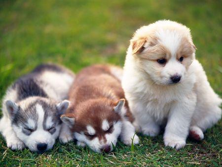 ★Cute Puppy★