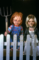 Chucky - tiffany photo