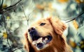 Dog  - dogs wallpaper