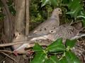 Doves - doves photo