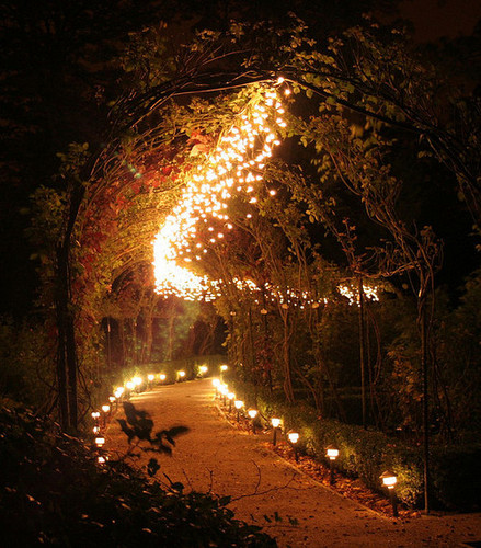 Forest of Lights