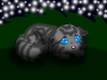Jayfeather - warrior-cats photo