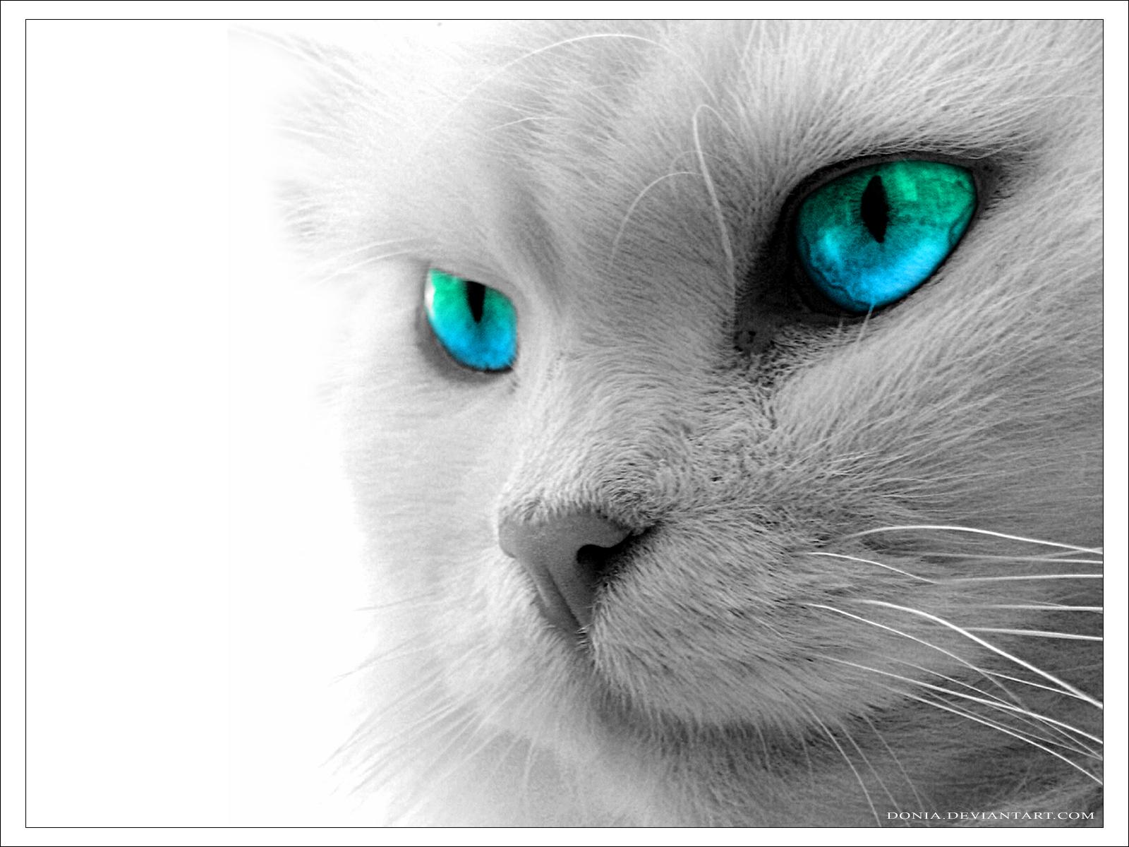 Kitty - Cats Wallpaper (32965081) - Fanpop
