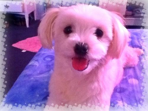 My Pup Molly! ;) <3333 *^_^*