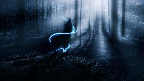 serigala, wolf kertas dinding