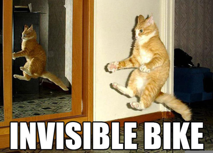 funny pictures | Publish with Glogster! Funny Pictures Of Cats