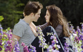love forever edward and bella  - twilight-series wallpaper