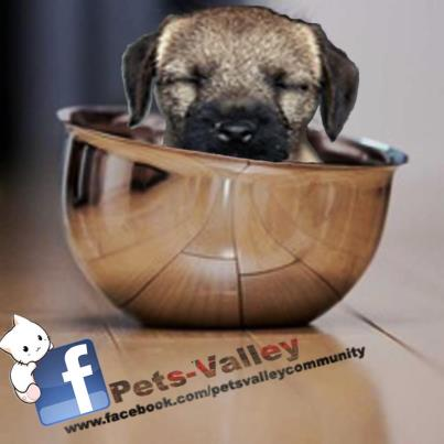 pets-valley ad