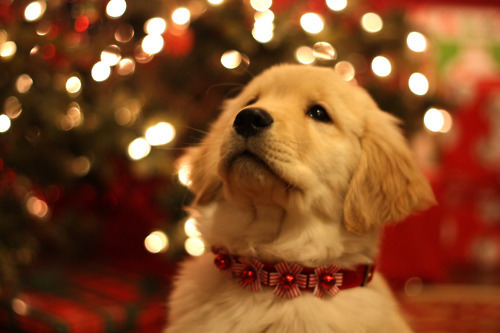 ★Dogs Amore Natale too☆