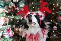 ★Dogs love Christmas too☆