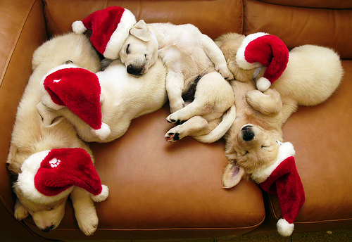 ★Dogs l'amour Christmas too☆
