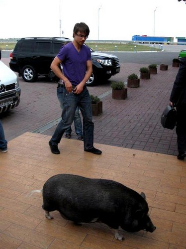 Alexander Rybak fond d'écran possibly with a truie, cahier des charges called Alex and pig