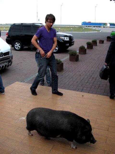 Alex and pig