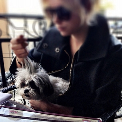 Lucy Hale & Ashley Benson wallpaper probably containing a lhasa entitled Ashley