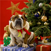 Christmas dog icon - teddybear64 icon