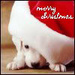 Christmas dog icon