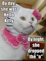 Funny lol Pics of gatos
