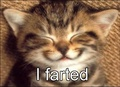 Funny LOL Pics of cats  - lol photo