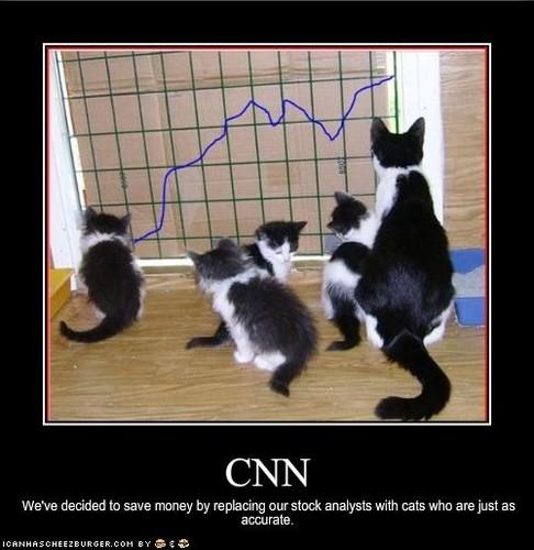 Funny लोल Pics of बिल्ली