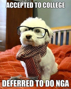 Hipster chiot