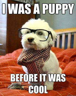 Puppies wallpaper titled Hipster Puppy