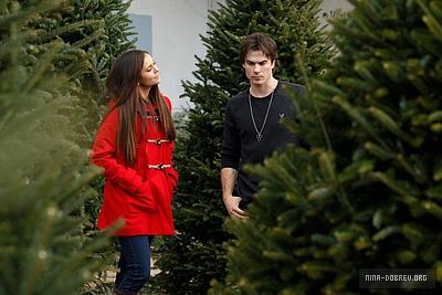 Ian and Nina Shopping for navidad trees