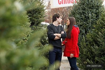 Ian and Nina Shopping for Christmas trees