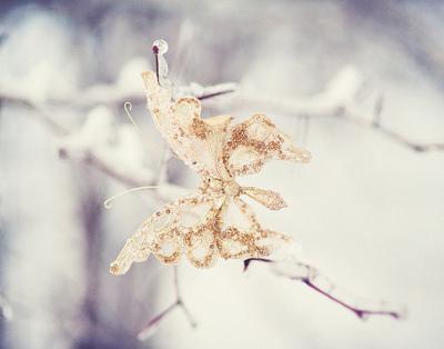 Winter con bướm, bướm for my fairy sister
