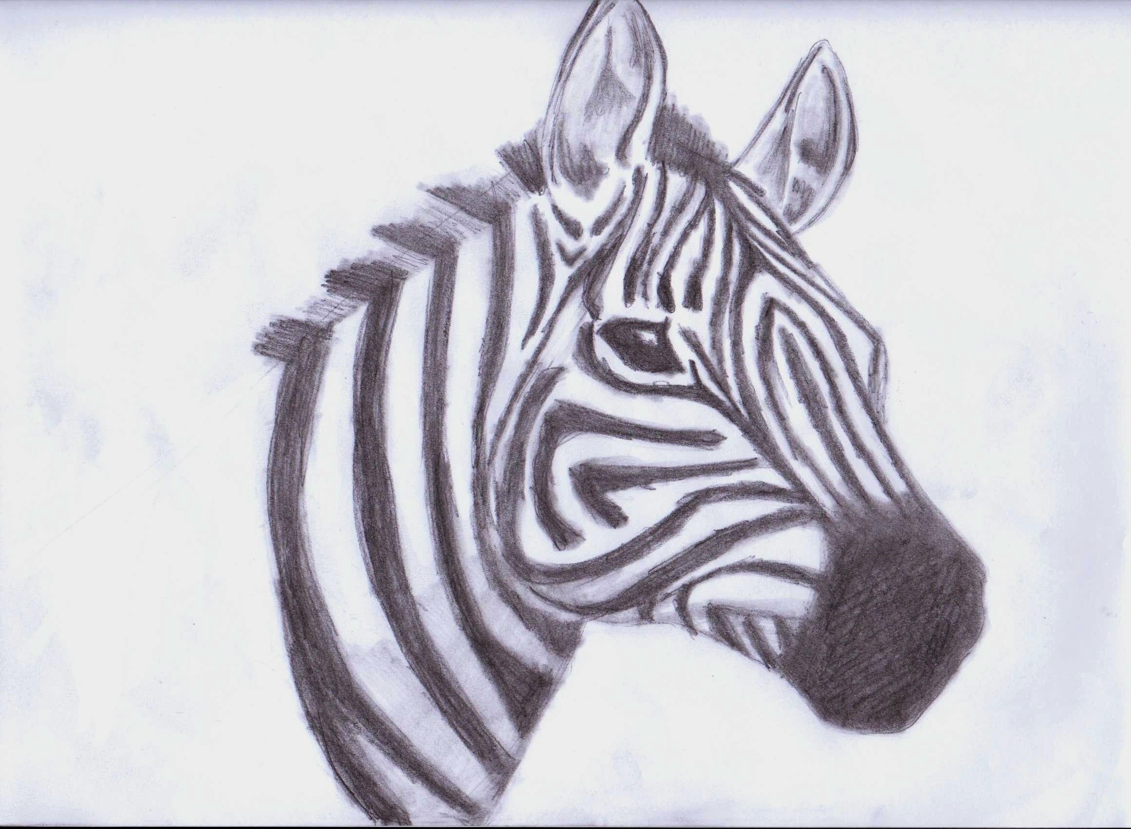 zebra drawing - photo #1