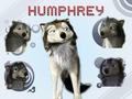alpha-and-omega - humphrey wallpaper