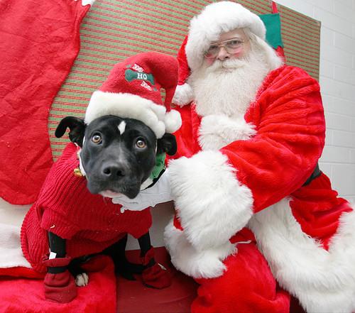 santa and pup santa