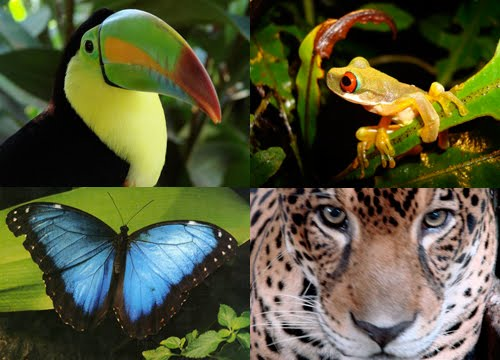 Amazon Rainforest Animals