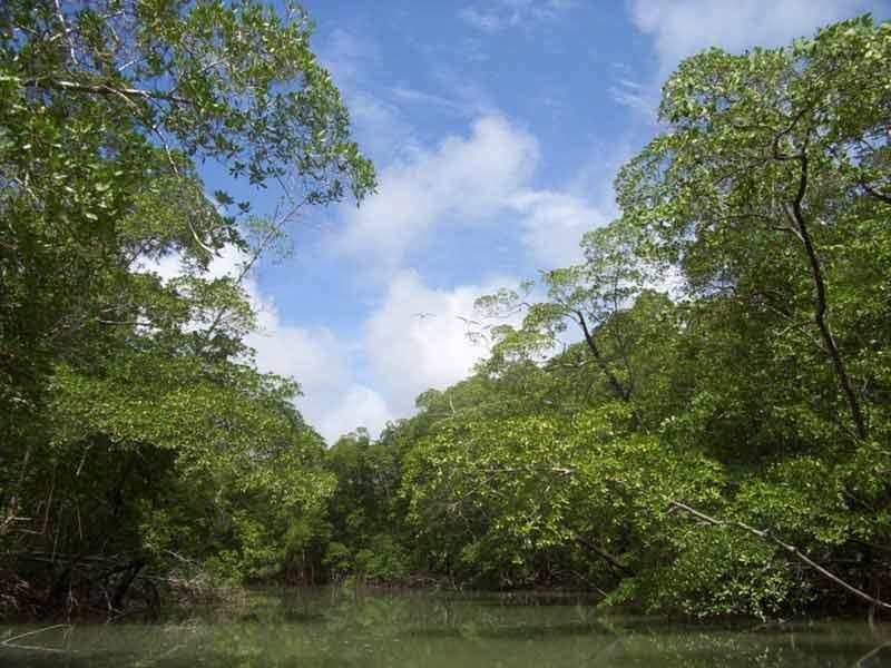 Amazoncom 3d wallpaper nature