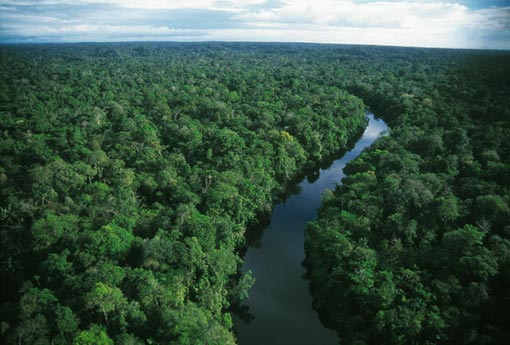Amazon Rainforest Images Wallpaper And Background Photos