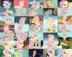 Fluttershy Collage