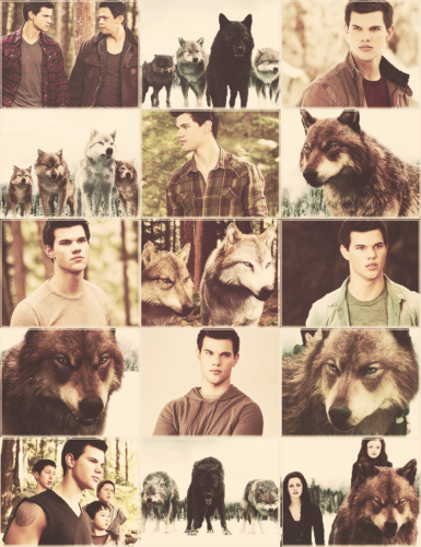 Jacob Black پیپر وال called Jacob with the pack - BDp2