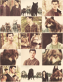 Jacob with the pack - BDp2 - the-quileute-wolf-pack fan art