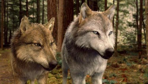 Seth and Leah in wolf form,BD 2
