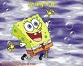 Spongebob Wallpaper - spongebob-squarepants wallpaper